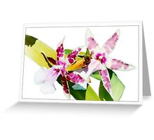 Orchid #1 - Cambria - Postcard Greeting Card