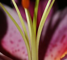 Lily, oh so lily by Adam Jones