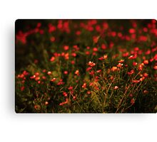 Flower Bokeh... Canvas Print