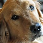 A Golden Retriever Named Max by Sarah B. Locke