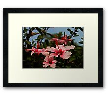 Reaching -Up Framed Print