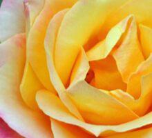 Orange and Pink Rose Sticker