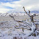 Winter Beauty by Harry Oldmeadow