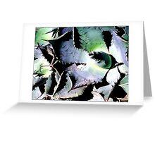 Agave #3 - Postcard Greeting Card