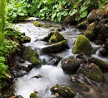A Gentle Stream by Lynne Morris