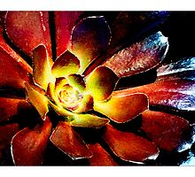 Succulent #1 - Postcard by Michelle Bush