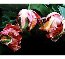 Tulip #5 - Parrot - Postcard by Michelle Bush