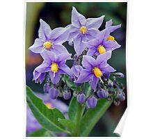 Lovely little purple flowers Poster