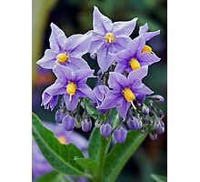 Lovely little purple flowers Photographic Print