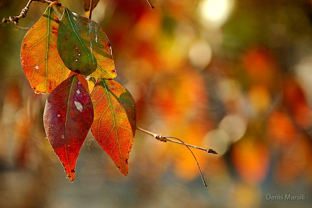 Seasonal Leaves by Denis Marsili - DDTK