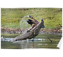 Marsh Crocodile Poster