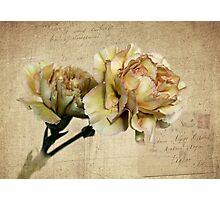Vintage Carnations Photographic Print