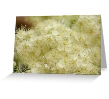 Mountain Ash Blossom Greeting Card