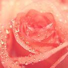 sweet rose by Angel Warda