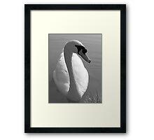 Swan BW Framed Print