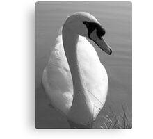 Swan BW Canvas Print