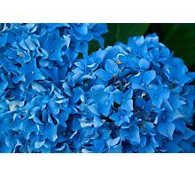 Blue Flourish Photographic Print