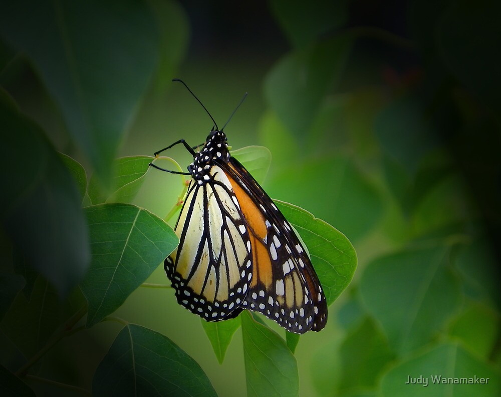 Hiding Among the Leaves by Judy Wanamaker