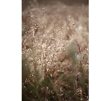 The Wind Owns The Grass Photographic Print