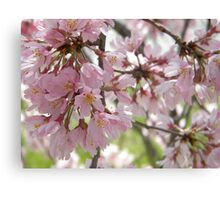 Pure and Gentle Canvas Print