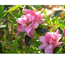 Pink Elegance Photographic Print