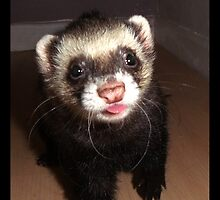 Ferret with tongue out by Fennic