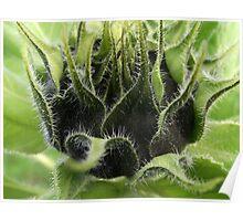 """""""Sunflower Babys"""" Poster"""