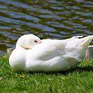 Goose by Borror