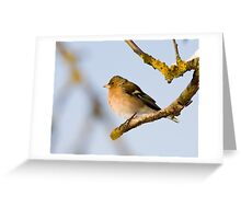 European Chaffinch in the freezing cold Greeting Card