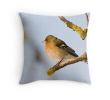 European Chaffinch in the freezing cold Throw Pillow