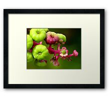 Poke Flower Changing To Berries Framed Print