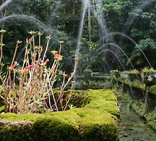 Flower Box and Water Fountain - Paronella Park by randomness