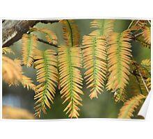 Autumnal pattern Poster