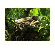 Robins of Spring Art Print
