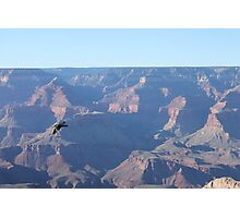 Grand Canyon Bird Photographic Print
