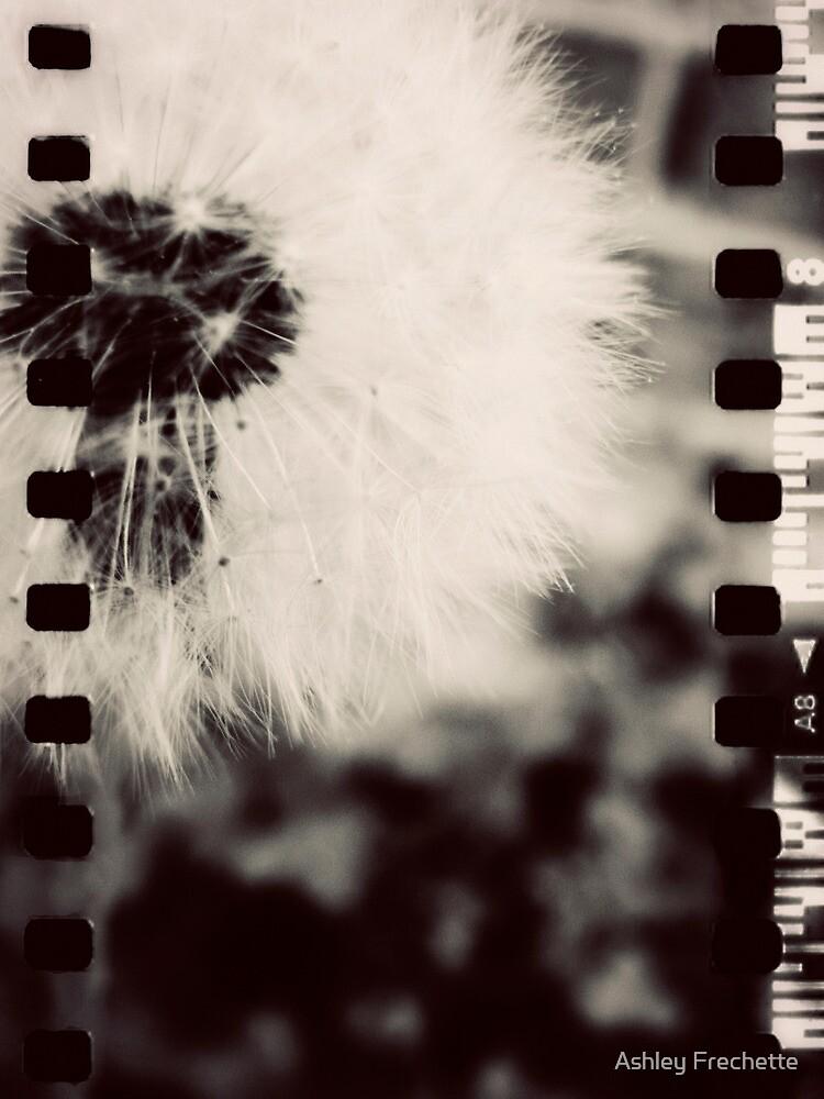 Wishing Flower - Film Overlay by Ashley Frechette