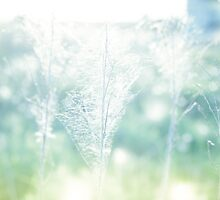 Dry field plants in a bright sun light with gossamer by Sviatlana Kandybovich