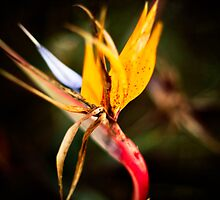Bird of Paradise by Jon Yager