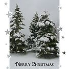 Three Trees Christmas Card by artgoddess