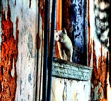 Ghost Kitty in the Window by Kim McClain Gregal