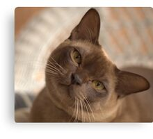 Dreamy Burmese Canvas Print