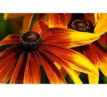 Fiery Petals Photographic Print