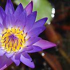 Purple Beauty by Kat36