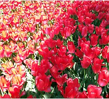 Flowers 0649 Photographic Print