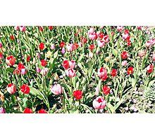 Flowers 0651 Photographic Print