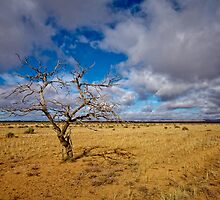 Lonely Tree - Steinfeld, South Australia by AllshotsImaging