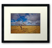 Lonely Tree - Steinfeld, South Australia Framed Print