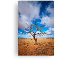 Lonely Tree at Steinfeld - South Australia Canvas Print