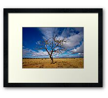 Portrait of a Tree - Steinfeld, South Australia Framed Print