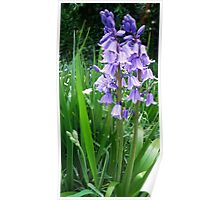 Synchronised Swaying Bluebells Poster